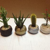 Cactus Miniatura En Maceta De Barro Minis En Varios Colores