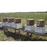 Nucleos De Abejas ,apicultura, Colmenas