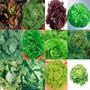 12 Variedades Sementes De Alface P/ Horta Mudas Vaso Campo