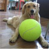 Pelota Gigante Tipo Tennis Para Perro O Mascota
