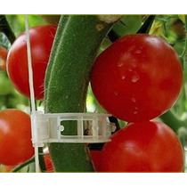 100 Clips Pc Tomate Connect Pimientos Pepinos Vides A Trelli