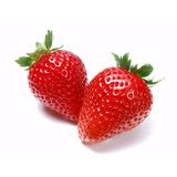50 Semillas Frutilla Organica! Para Huerto - Despachamos