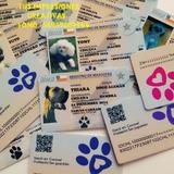 Credenciales De Pvc Para Mascotas Llaveros Personalizados