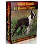 Libro Electrónico El Boston Terrier Adiedstramiento Y Mas. .