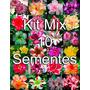 Kit Mix 10 Sementes Rosa Do Deserto Frete Grátis Todo Brasil