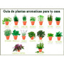 Plantas Aromaticas! Romero, Albahaca, Oregano, Tomillo, Etc!