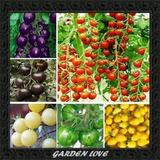 120 Sementes De Tomate 12 Espécies, 10 De Cada + Brinde