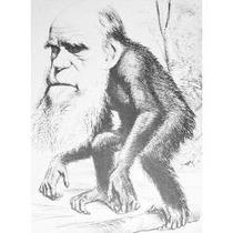 Libro El Origen Del Hombre, Charles R. Darwin.