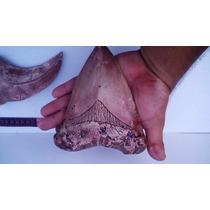Diente Megalodon Replica Fosil