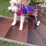 Silla De Ruedas Para Perros Discapacitados