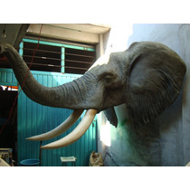 Animales Disecados 100% Artificiales Exoticos Elefante Cab