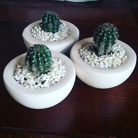 Maceta Mini Jardin Cuadros Cactus Vidrio Cortina Decorar