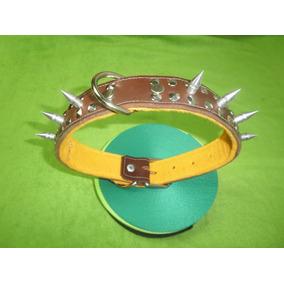 Collar Con Picos Para Bullterrie Ingles Y Pit Bull