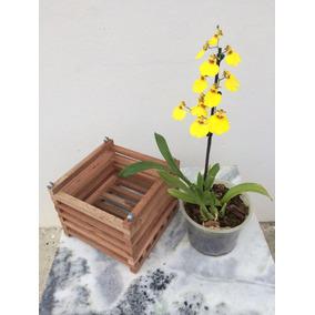 Cachepot De Madeira Rústica Porta Vaso De Orquídea Kit 25 Un
