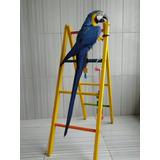 Brinquedos P Araras/papagaios/ Escada-g Encanto Das Aves