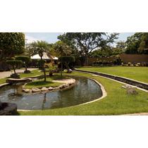 Jardín Jacarandas Bodas Eventos Fiestas Cuernavaca Jiutepec