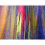 3 Plantines Eucalipto Arco Iris(deglupta Camarere)únicos!!!