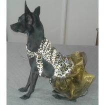 Roupa Cachorro Totopet Piriguete - Bulldog Burriler Splits