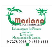 Mariano Plantas Ornamentais/jardins.manutencao/terra Pretas