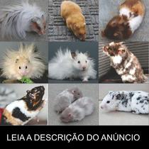 Hamster - Tudo Sobre Genética (frete Grátis) Promoção!