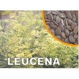 Leucena Leguminosa 200 Sementes Mais Brinde