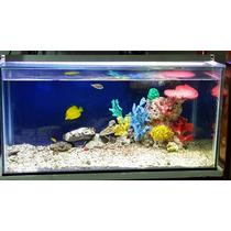 Corales Artificiales Marinos