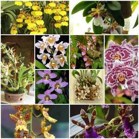 Paquete 6 Orquideas En Base Madera 11x11 Natural 11 Variedad