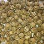 Semillas Arbol Teca, Reforestacion Certificadas,mejoradas