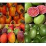 Como Montar Beneficiamento Polpa Fruta Apostila Sebrae Pdf