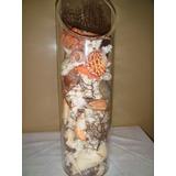 Cilindro De Acrilico Con Caracolas Marinas Y Corales