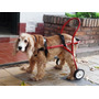Carritos Ortopédicos P/animales Con Discapacidad (t.mediano)