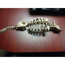 Adorno Para Acuario Esqueleto De Dinosaurio