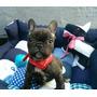 Camitas Para Perros, Diseños Exclusivos!!!!!!