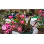 Abono Organico Para Orquideas, Anturios Y Plantas En General