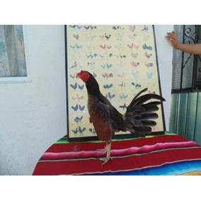 Gallos De Pico Y Espuela