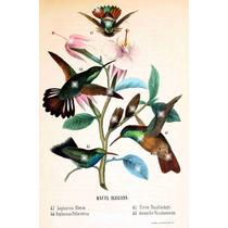 Lienzo Tela Aves De México Colibries 1 1875 80 X 50 Cm Arte