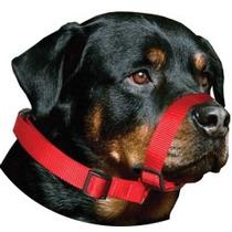 Coleira Focinheira Passeio Cães Cachorro Médio Grande Porte