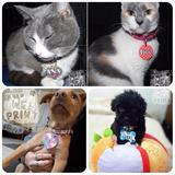 X Mayor Identificación/colgante Para Mascotas Ambas Caras