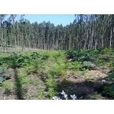 Lenha De Eucalipto Ecológico - 10 Unidades 30cm