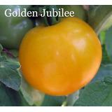 Sementes De Tomate Golden Jubilee Variedade Crioula De Usa