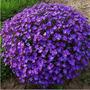 20 Sementes Violeta Rainha Africana Bonsai Plantas Flores