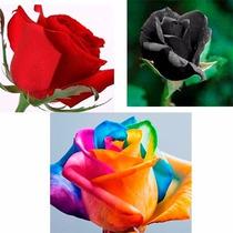 60 Sementes De Rosas Vermelha Negra E Arco-iris Promoção