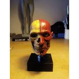 Escultura Cráneo Anatomía Humana Fc