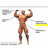 Suplemento Aumenta Testosterona Musculo Virilidad 100% Efec