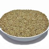 Semente De Alpiste (granel 5kg) Qualidade Premium
