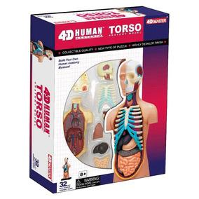 4d Master Modelo Anatómico Torso Humano 4d Vision