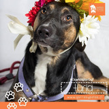 Hermosa Cachorra De 9 Meses En Adopcion.