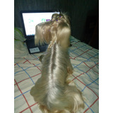 Yorkshire Terrier Con Pedigree Para La Monta