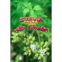 Muda De Stevia Rebaudiana (somente Retirada Em Niterói)