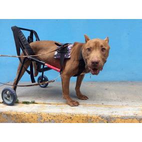 Andaderas para perros discapacitados en mercado libre m xico for Carritos para perros